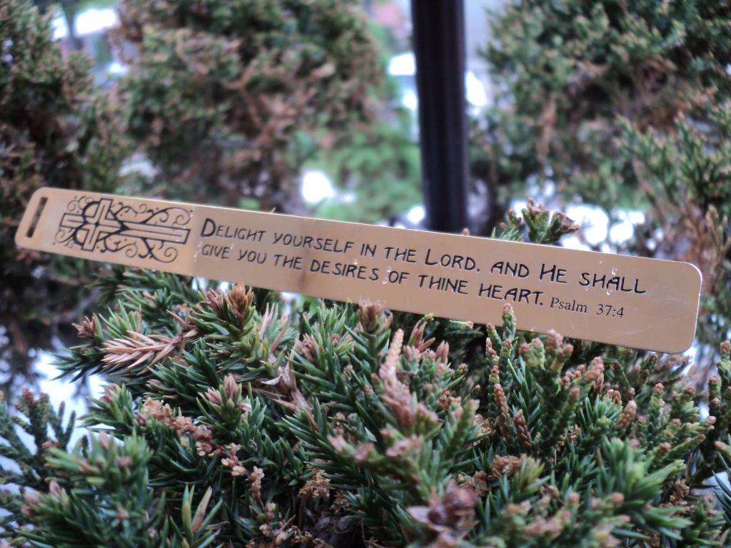 Psalm 37:4 Photo